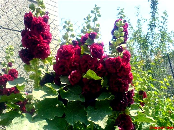 Многолетние цветы, способные